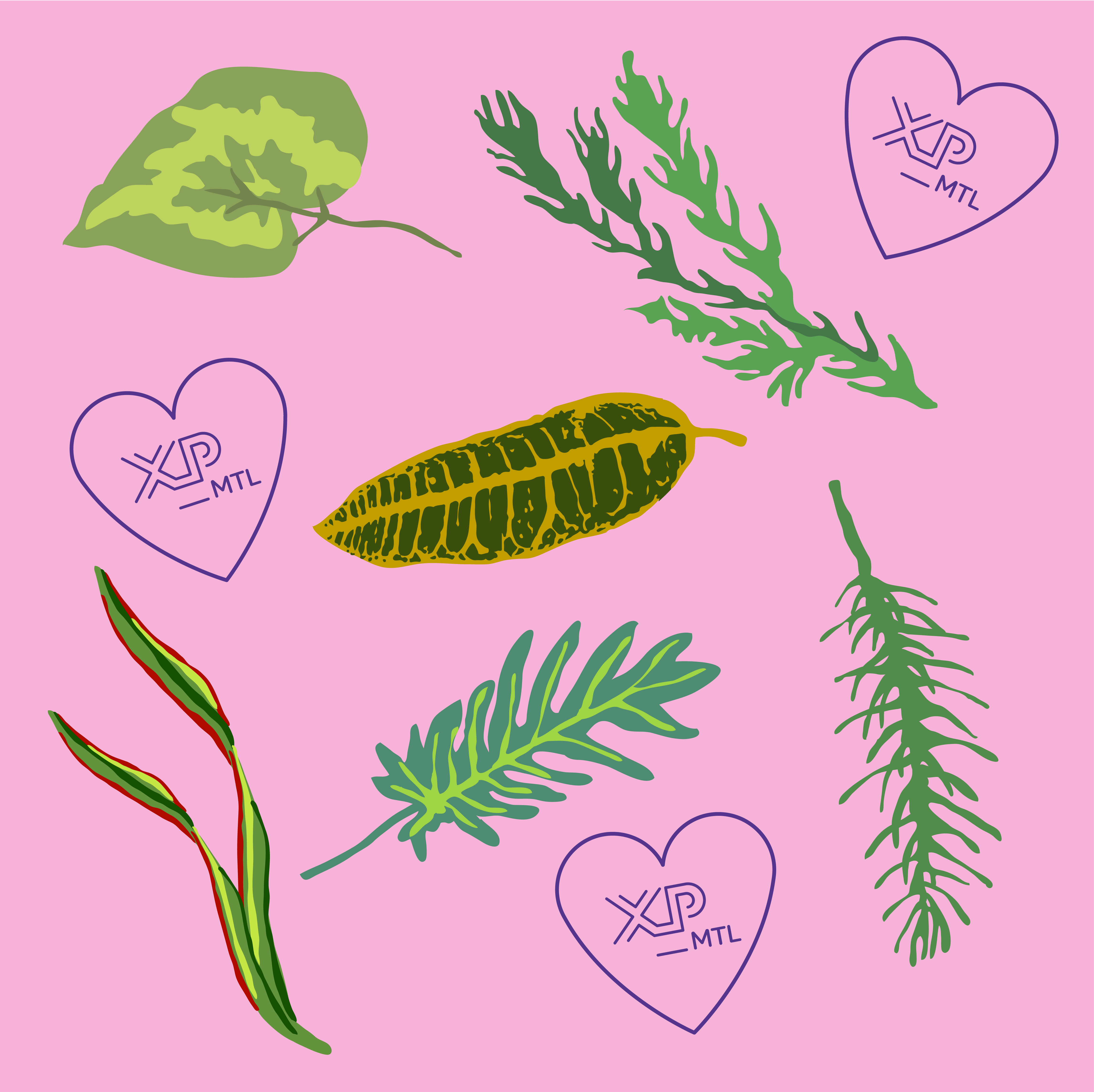 XPMTL_PLANTES-carree